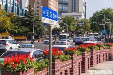 青岛:鲜花扮靓秋日街头